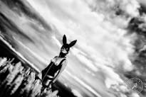 Bunny-Mask-7
