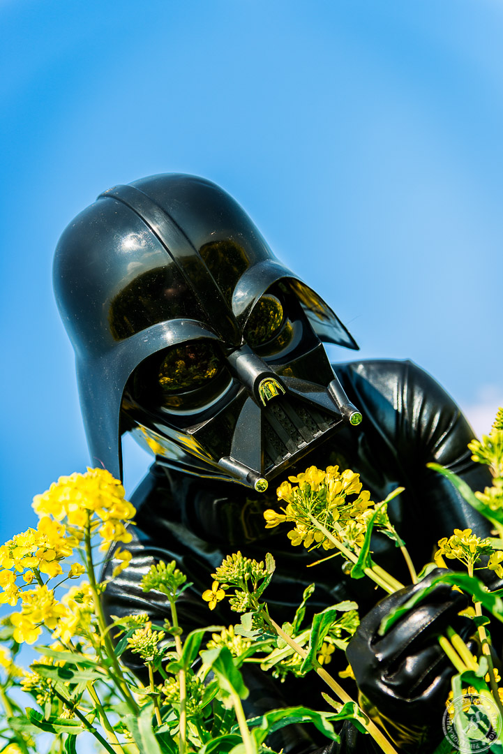 Apologise, but, darthvader with naked girl serious?