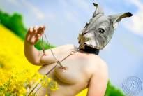 Nude Rabbit