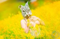 Rapsfeld Rabbit
